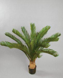 Cycas Palm (1075-110)