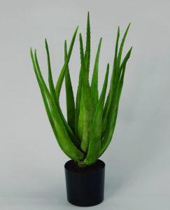 Aloe (1100-060)