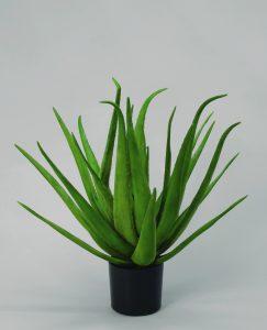 Aloe (1100-070)