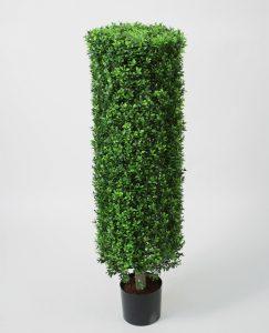 Boxwood  Cylinder (1138-110)