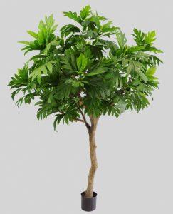 Artocarpus (1187-240)