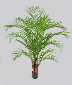 Areca Palm (1216-170)