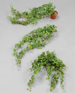 Finger Ivy (121A)