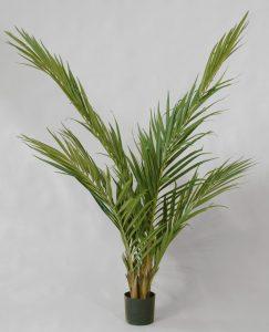 Majesty Palm (18-150)