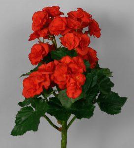 Begonia Bush  (5305)