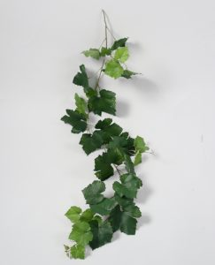 Grape Ivy Vine (5657)