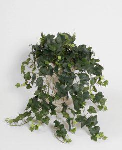 Ivy gala (5728)