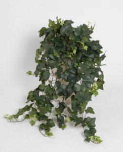 Ivy gala  (5729)