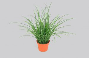 Grass Potted  (5893)