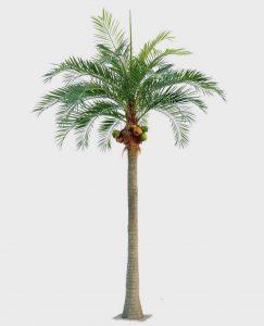 Coconut Palm (60-390)