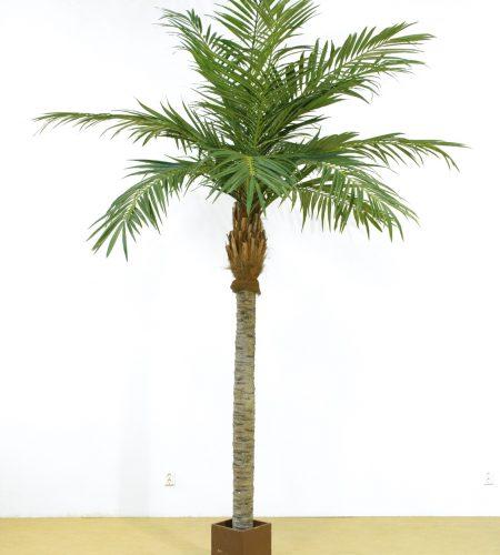 Majesty palm (64-300)