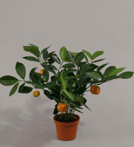 Citrus (801-1)