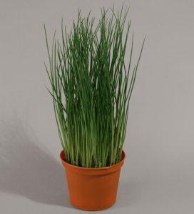 Grass pot (823-1)