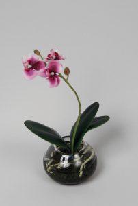 Phalaenopsis (846-4)