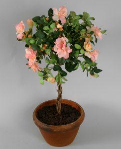 Azalea Pot (9373)