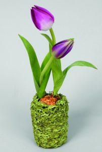 Tulip (9660)