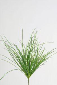 Carex Bush (2304)