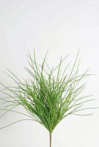 Carex Bush (2305)
