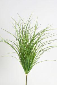 Carex Bush (2308)