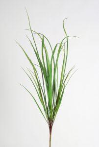 Carex bush  (2309)