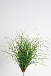 Carex Bush (2310)