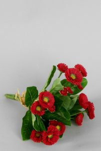 Bellis Bouquet (5452)