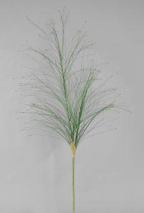 Johnson Grass (6332)