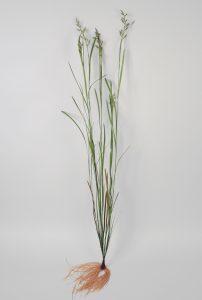 Grass (6870)