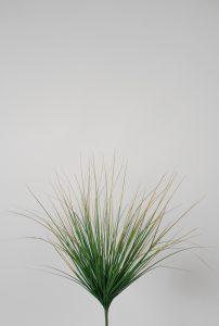 Grass Bush (6889)