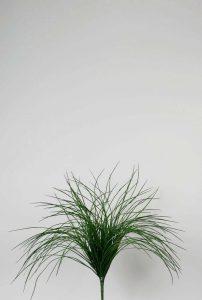 Grass Bush (9754)