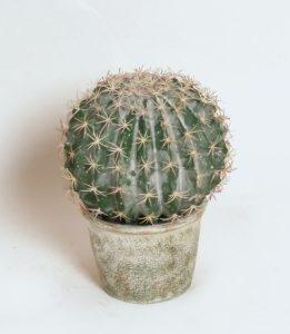 Cactus (2326)