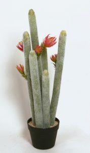 Cactus  (8104)