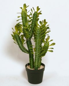 Cactus  (8105)