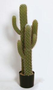 Cactus  (8111)