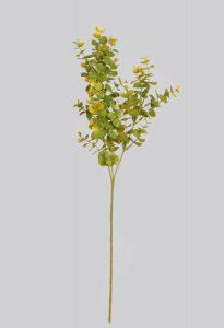 Eucalyptus (975)