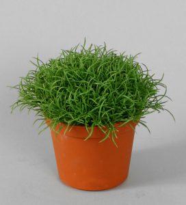 Hair Bush (5616)