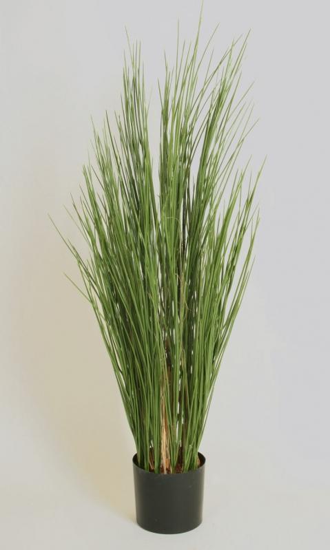 Grass (1230-120)