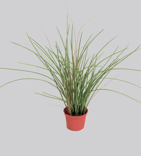 Grass (5909)