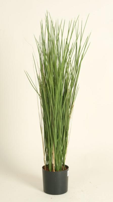 Grass (5910)