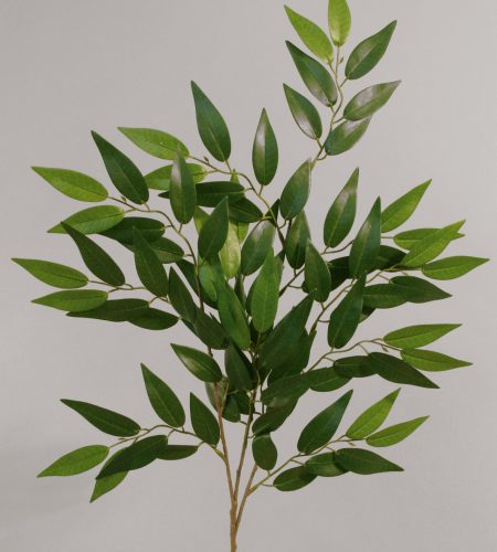French Ficus (9002)